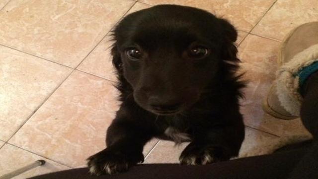 Se perdió Blas, la mascota de unos vecinos de Castelar
