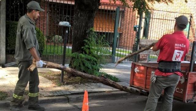 Retiran árboles caídos tras la fuerte tormenta del lunes