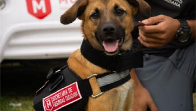 Morón suma una unidad canina para detectar explosivos y drogas